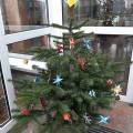 Ein Weihnachtsbaum als Geschenk