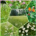 Wie steht es eigentlich um die Schmetterlingswiesen in Planitz?